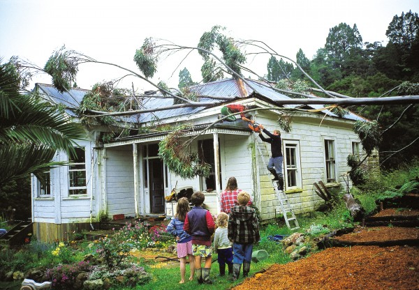 Some householders are leery of gums because they are prone to lose branches in storms, as the Smith family of Tapuhi, in Northland, learned to their cost.