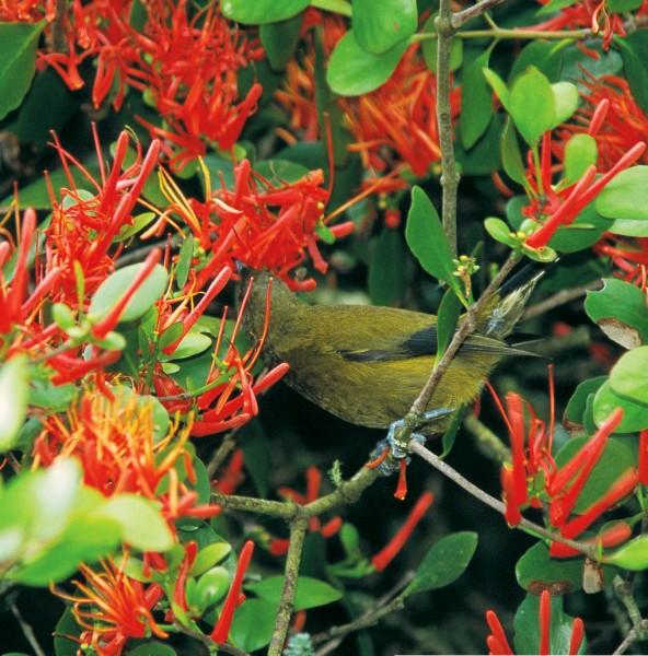 59_Mistletoes_07