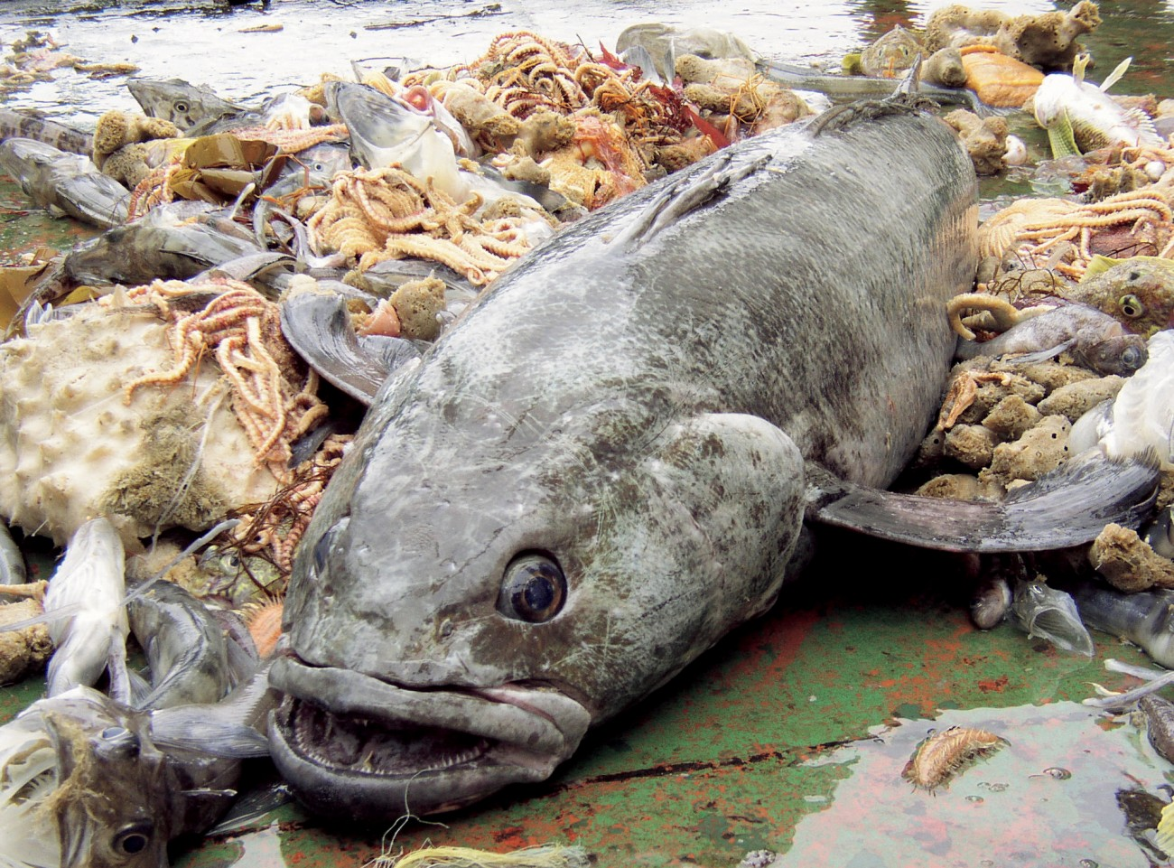 the ross sea toothfish fishery new zealand geographic