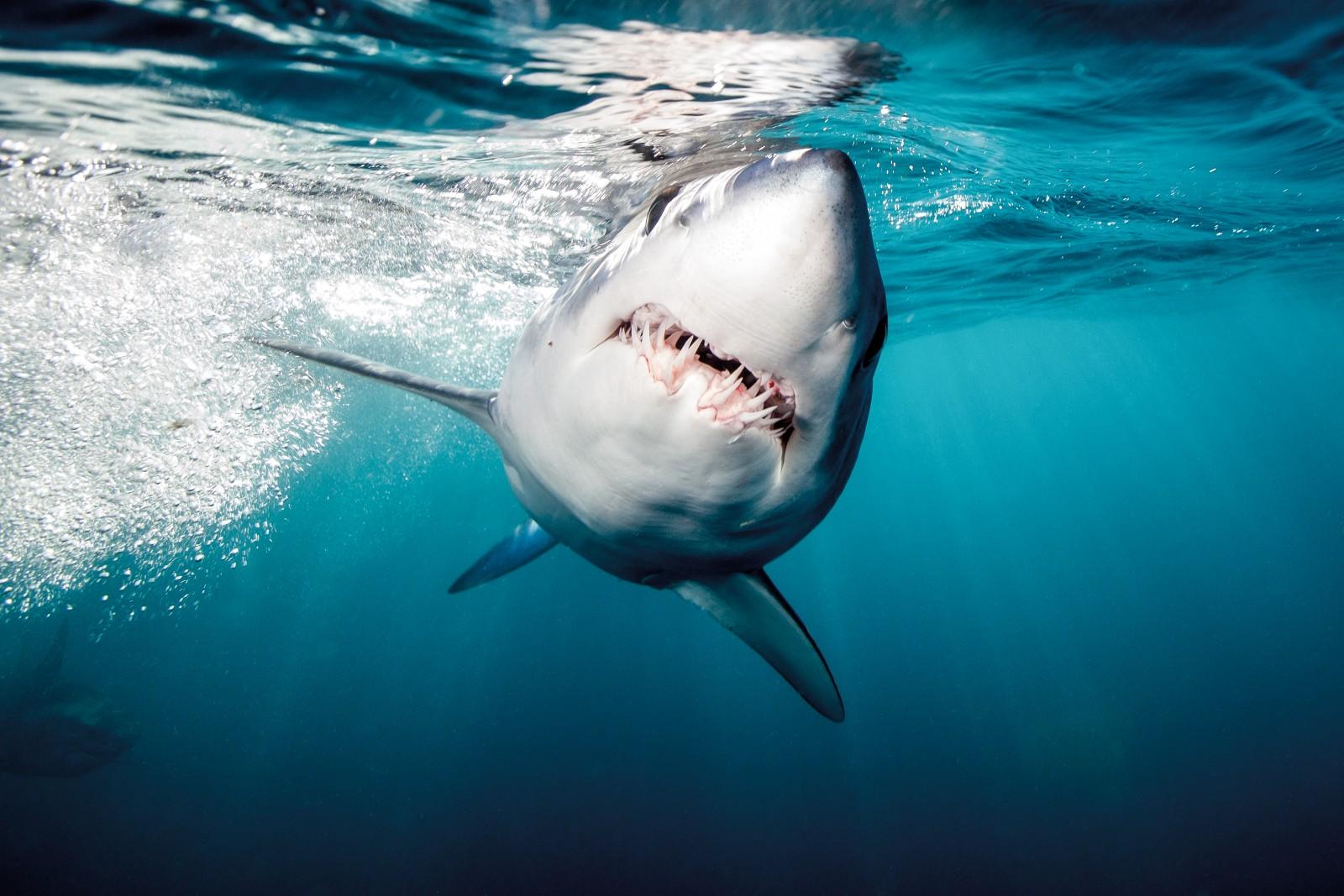 день, тематичные картинки про акул восхищаюсь работами