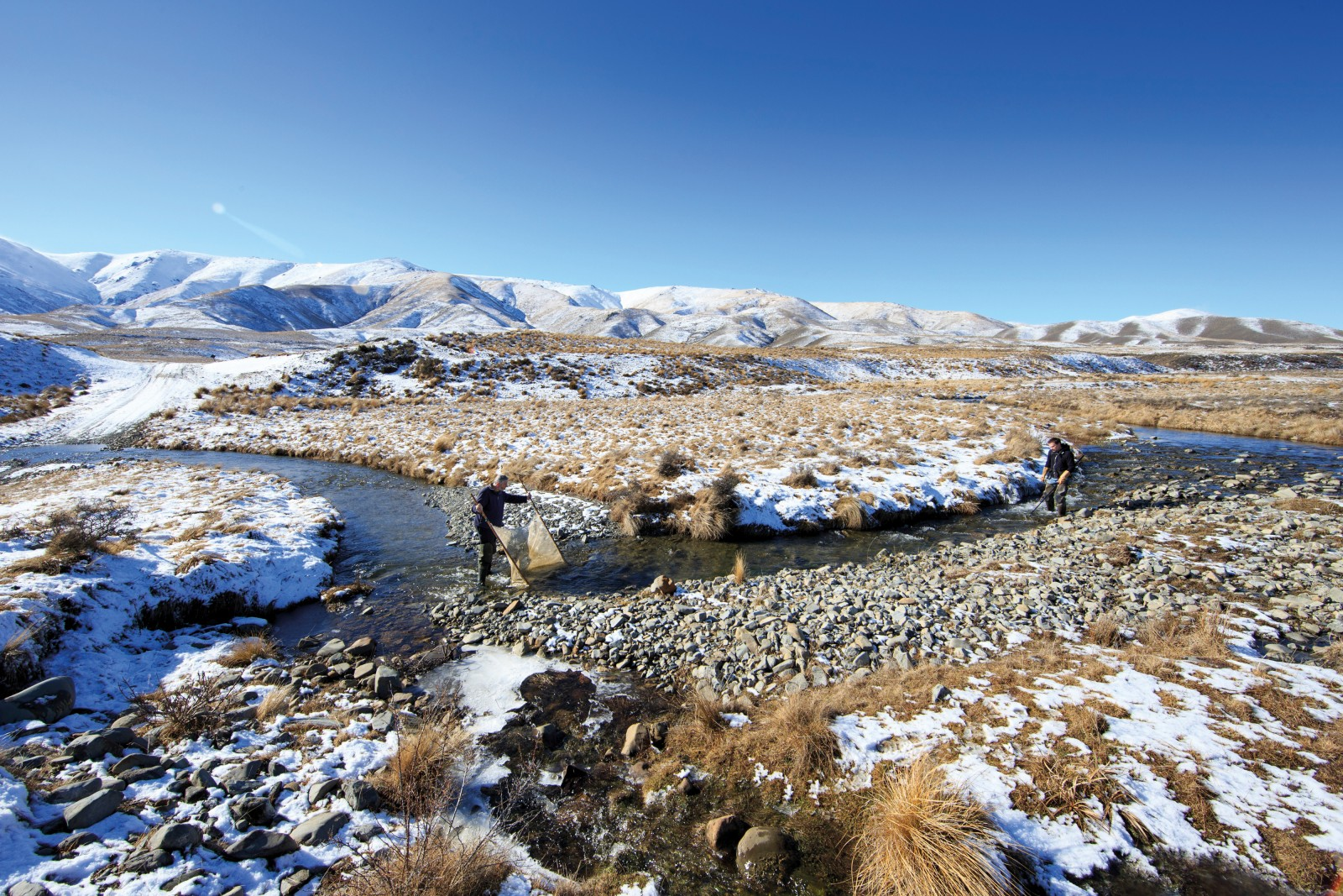 """TURBULENT PAST Photographer Richard Robinson and I meet Dave Craw and Jon Waters on the banks of a cold upland stream on a blue-sky Central Otago day. The wind is taking the snow off the tops, making the mountains appear to smoulder. At first glance they're an unlikely team—Craw a seasoned mineral geologist, Waters a researcher at the helm of some of the most exciting genetic work being done in New Zealand. But theirs is a highly successful collaboration, an elegant example of multi-disciplinary science in action. Movement along the Alpine Fault has caused the rock basement here to buckle and fold, creating a cross-hatch of hills. As the ranges have been thrust up, water has had to find new routes through the landscape. The stream we are standing in has been 'captured'. Craw shows me where a low hill has blocked its path and how the stream has subsequently cut a new channel to join up with another river to the west. Where a stream has been split in this way, the genetics of the fish on either side have also flowed apart, eventually resulting in two species. By analysing the genetics of neighbouring populations, Waters is able to calibrate the rate of genetic divergence and match it with Craw's geological evidence to build up a detailed picture of how this landscape has changed over time—biology and geology interacting to arrive at a greater understanding of the processes that have shaped this country. """"We've got it pretty well sorted now,"""" Craw tells me. """"When Jon's got a fish problem, he comes to me and I try to come up with a plausible story, and vice versa."""" As we clamber up the jumbled riverbed, Craw picks up a stone of richly patterned greywacke conglomerate. He turns it over to examine the communities of insect larvae living on the bottom, but it's the rock itself that interests him most; it was a key piece of evidence in his and Waters' most recent publication. That research compared the genetics of a species found in the Taieri River, Galaxias depressiceps, """