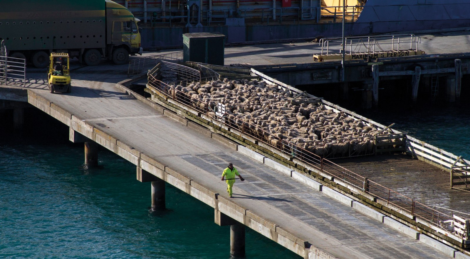 Sheep bound for the freezing works in New Zealand are yarded on the wharf at Waitangi, the main settlement on Chatham Island, as they wait to board a cargo ship. A $52 million replacement wharf and breakwater are under construction, and will eliminate the costly delays incurred currently when heavy weather prevents vessels from berthing.