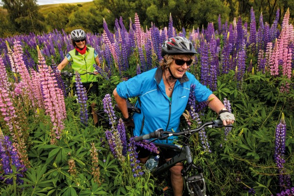 Cyclists push through lupins on the Alps to Ocean Cycle Trail in the Mackenzie Country, where the blooms have become as much of the landscape as tussock.