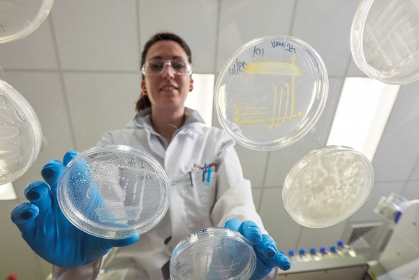 Traditionally, identifying them required isolating, culturing, and testing them in the lab, as researcher Jean Power does at GNS (at right). But the majority of micro-organisms can't be convinced to grow on their own. Now, next-generation gene sequencing allows scientists to identify any of the extremophiles they find, not just those that thrive in a petri dish.
