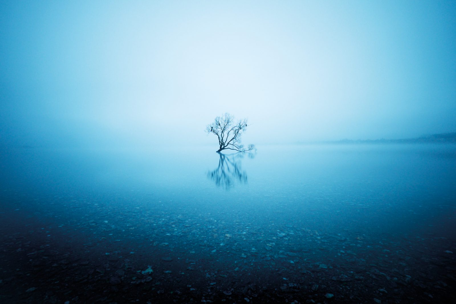 The willow in Lake Wanaka is arguably the most photographed tree in New Zealand, drawing Dennis Radermacher outdoors on a foggy winter's morning. Wetland willows fringe Lake Wanaka and form its distinctive golden backdrop, but only one stands in the water. 'The Lone Tree' has weathered the lake's rises and falls for at least 20 years; its bare branches offer a resting place for shags.