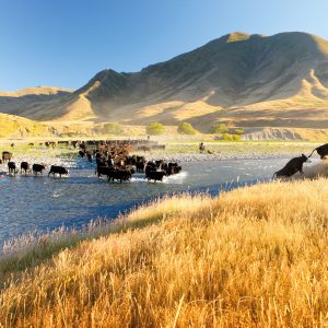 New Zealand's largest high-country station, Molesworth, covers a greater area than Stewart Island and has one of the country's largest cattle herds. Suisted spent three years documenting the region, the fruits of which were published in the book Molesworth in 2013. The station is now managed by the Department of Conservation.