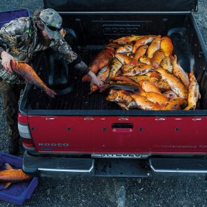 "Koi carp are considered a pest species in the Waikato River, and so every November, members of the New Zealand Bowhunters' Society converge on Huntly in order to spend a weekend shooting as many as possible, competing for the titles of 'most' and 'heaviest'. Richard Robinson documented the competition in 2014 for New Zealand Geographic magazine. ""It was one of those shoots that just come together so well,"" he says. ""These people are passionate hunters, and quite interesting characters."" Robinson also spent time diving in murky waters in order to capture the portrait of a live koi carp which features in the series."