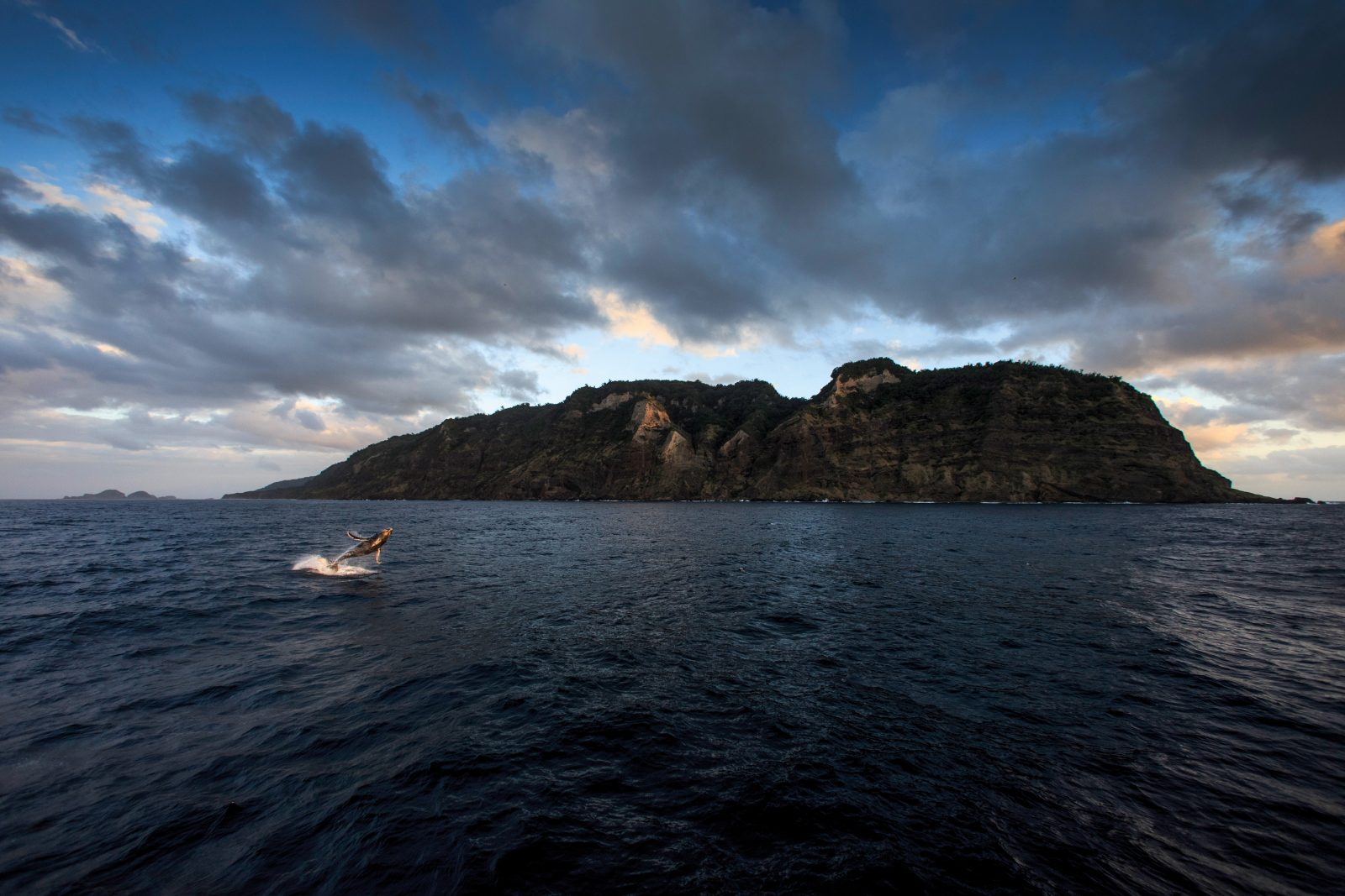 The springtime migration of whales through the Kermadec region is recorded in Polynesian oral histories as well as the diaries of European settlers on Raoul Island. The 2015 expedition was the first opportunity for a formal scientific study of these whales. As RV Braveheart departed the south-west coast of Raoul, the team was farewelled by the exuberant breaches of this humpback calf.