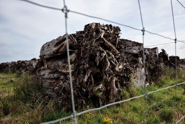 There are several huge stockpiles of swamp kauri timber in Northland—such as this one owned by an Oravida-linked company at Ruakaka. It's evident export figures don't accurately reflect the tonnage of kauri quarried from Northland.
