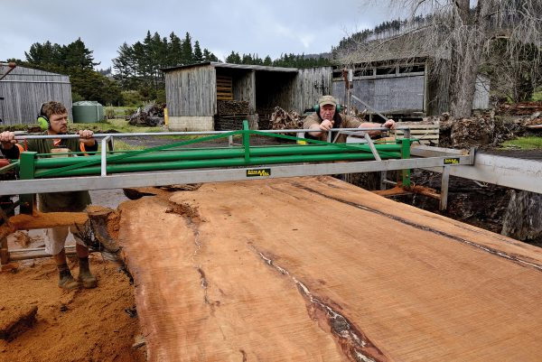 Nelson Parker (right) mills a swamp kauri slab with employee Todd Cobbin. To be milled and sold overseas, kauri requires a 'milling statement' from MPI, showing it wasn't taken from indigenous forest or wetland. Ninety per cent of Parker's business is export—China was the biggest buyer a few years ago but now there's more interest from the Netherlands and Slovakia. Many buyers want tabletops or stump slabs, he says, rather than elaborate dressers or chests of drawers.