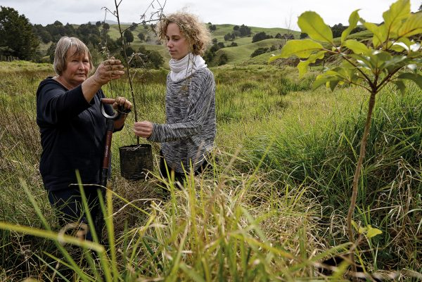 "Environmentalist Fiona Furrell (left) plants a kahikatea in a wetland on her own farm near Whangarei. She's tireless in her campaign to stop swamp kauri mining in the north. ""We are having an impact—but we're still not protecting the wetlands,"" Furrell says. ""They're amazing places and they're thousands of years in the making, and these diggers destroy them like pulling the plug out of a bath."""