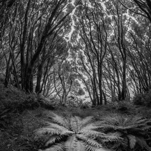 Ferns reclaim an old road at the historic settlement of Hardwicke, a short-lived community founded in 1849 at Port Ross on the subantarctic Auckland Island. Tony Whitehead has been experimenting with making fisheye and wide-angle images of forest pathways, keeping the horizon centred in the frame to avoid distortion.