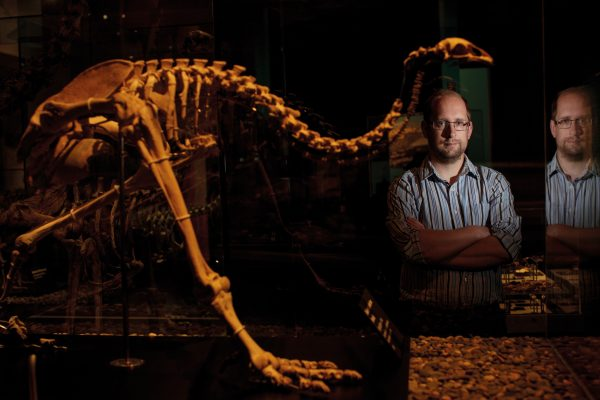Geneticist Nic Rawlence with one of the Otago Museum's many moa skeletons. There were nine species of moa in New Zealand, each adapted to different ecological niches, from high alpine areas to lowland forest. Ancient DNA research has recently shown moa evolved from flying ancestors that may have landed here more than 60 million years ago. They survived ice ages and major geological upheavals, but not the arrival of humans.