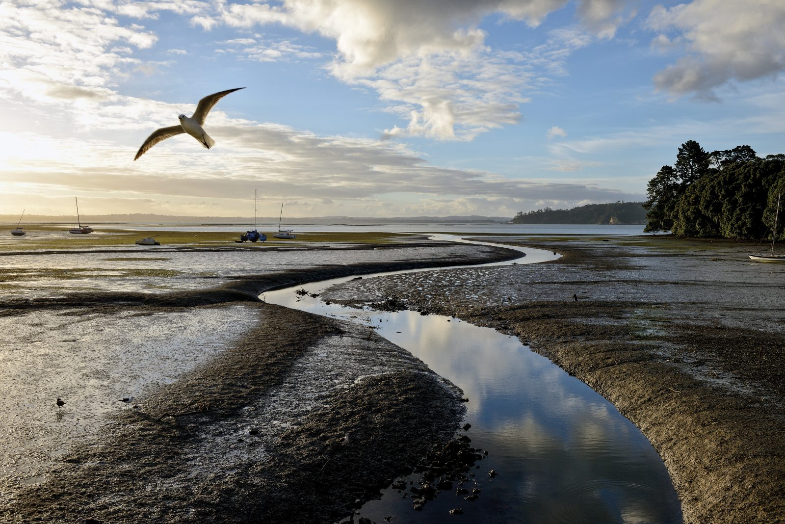 There are rich pickings for gulls and poor prospects for people at Cox's Bay, in Westmere, where a stormwater outlet periodically discharges sewage and sink wastes. The objectionable cocktail is the legacy of early Auckland's decision to channel stormwater and wastewater in the same pipes. This beach has been declared permanently unsafe for swimming.