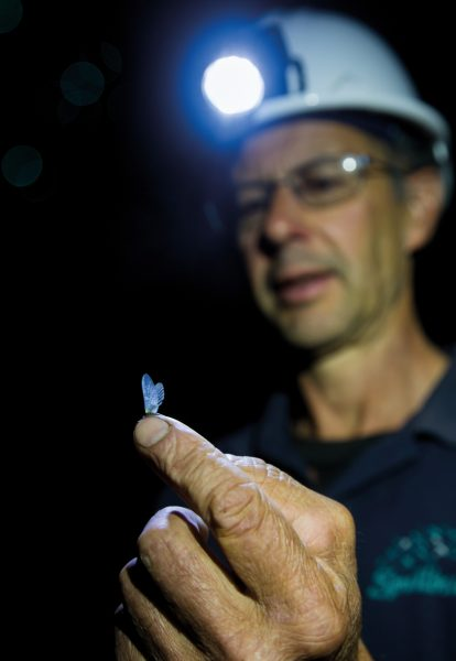 Pete Chandler shows a mayfly—glowworm prey—to his tour group. Tourists have been visiting Waitomo for almost 130 years, but do they affect the glowworms' health?