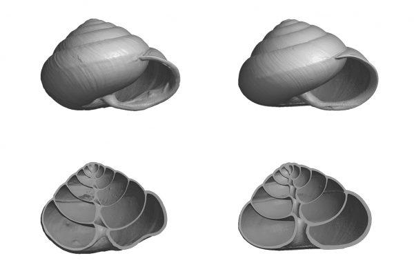 145_Life_shells2