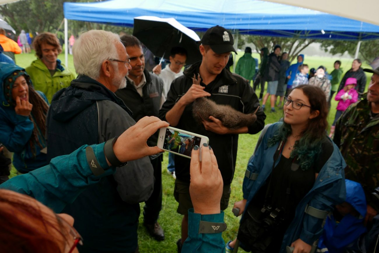 Several hundred Aucklanders came to Shakespear Regional Park on Saturday, April 29 to meet the new birds on the block: 20 little spotted kiwi.